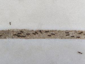 hormigas insectos lacas insecticidas