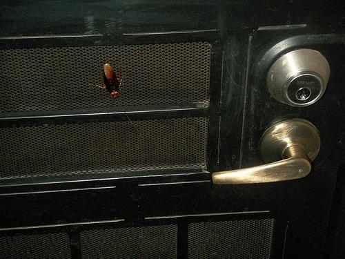Consejos para eliminar los insectos del hogar consejos - Eliminar insectos en casa ...