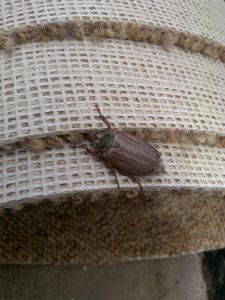 insectos alfombras egobon