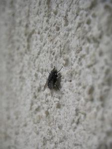 mosca insectos insecticida