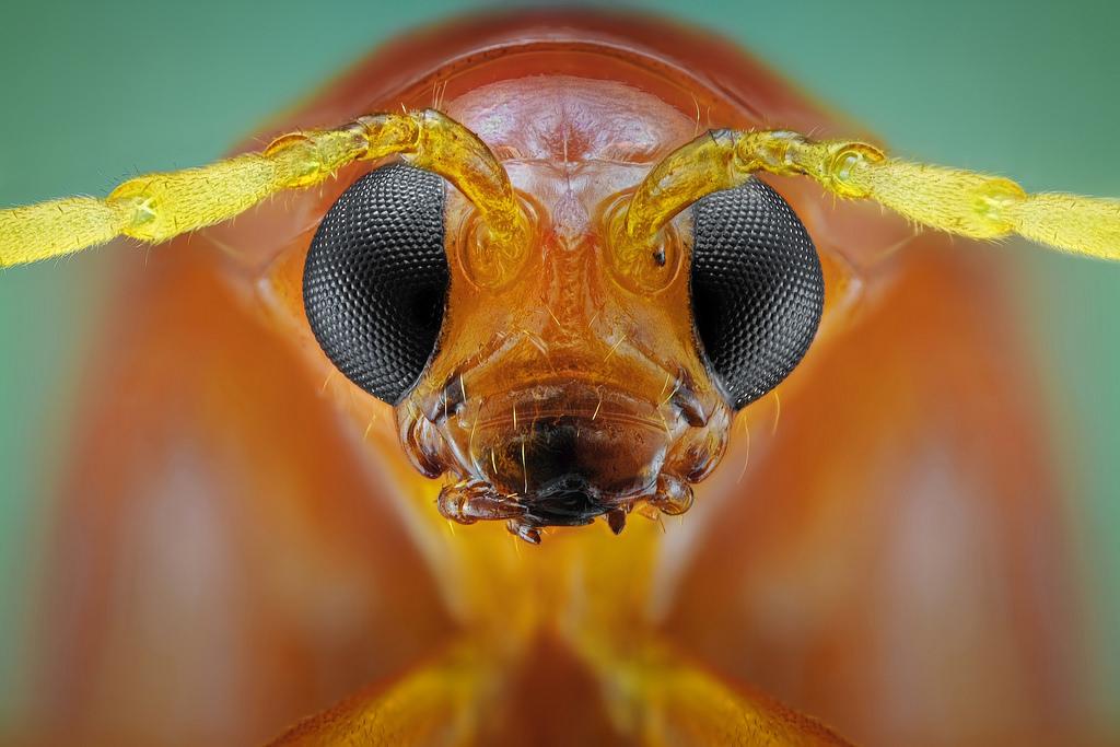 La vista de los insectos