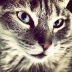 los gatos pueden tener pulgas y parásitos en invierno