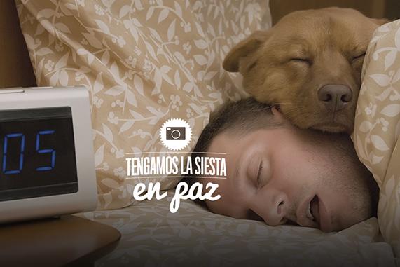 tengamos la siesta en paz perro