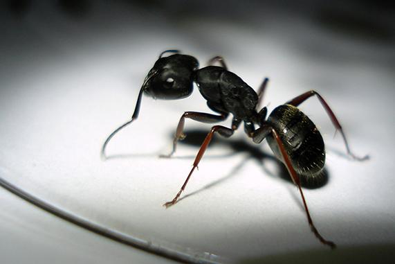 hormigas en la ciudad