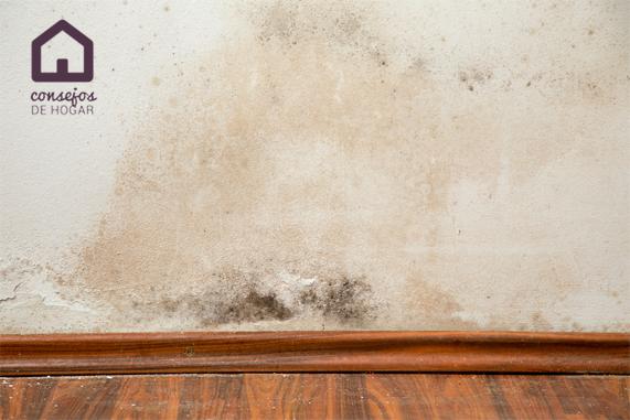 Problemas de humedad en el hogar. Ácaros y otras consecuencias