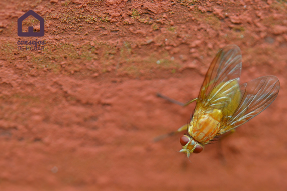 XterminTotal_insecticida