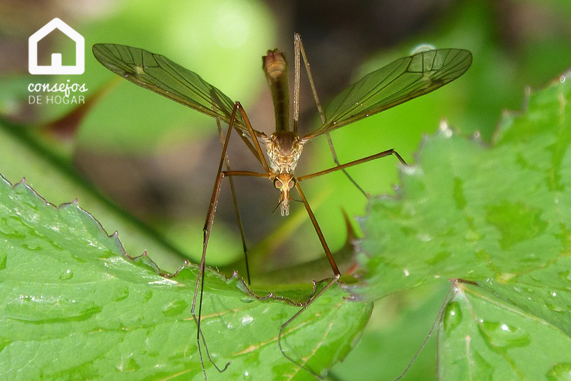 Conoce al enemigo: ciclo de vida del mosquito
