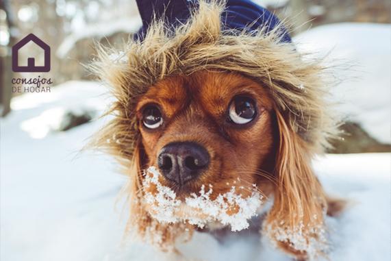 Cómo proteger a las mascotas en invierno